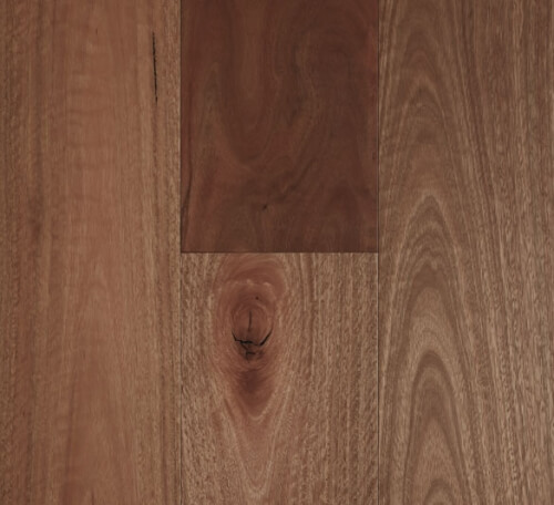 Spotted Gum – Smooth Matte