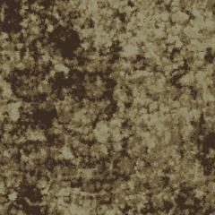 Algae M 10 2020 1546