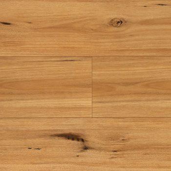 Ecualyptus Steps XL Blackbutt