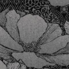 Waterlilies M 01 2021 0957
